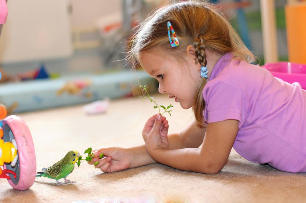 Los mejores consejos para cuidar de tu canario en casa